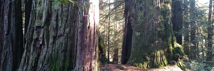 MT. MADONNA – A HIDDEN GEM IN THE SANTA CRUZ MOUNTAINS